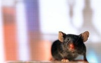 Ультразвук от мышей