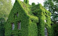 Дом с вертикальным озеленением