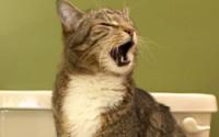 Отучаем кошку гадить