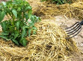 Мульчирование почвы травой (фото)